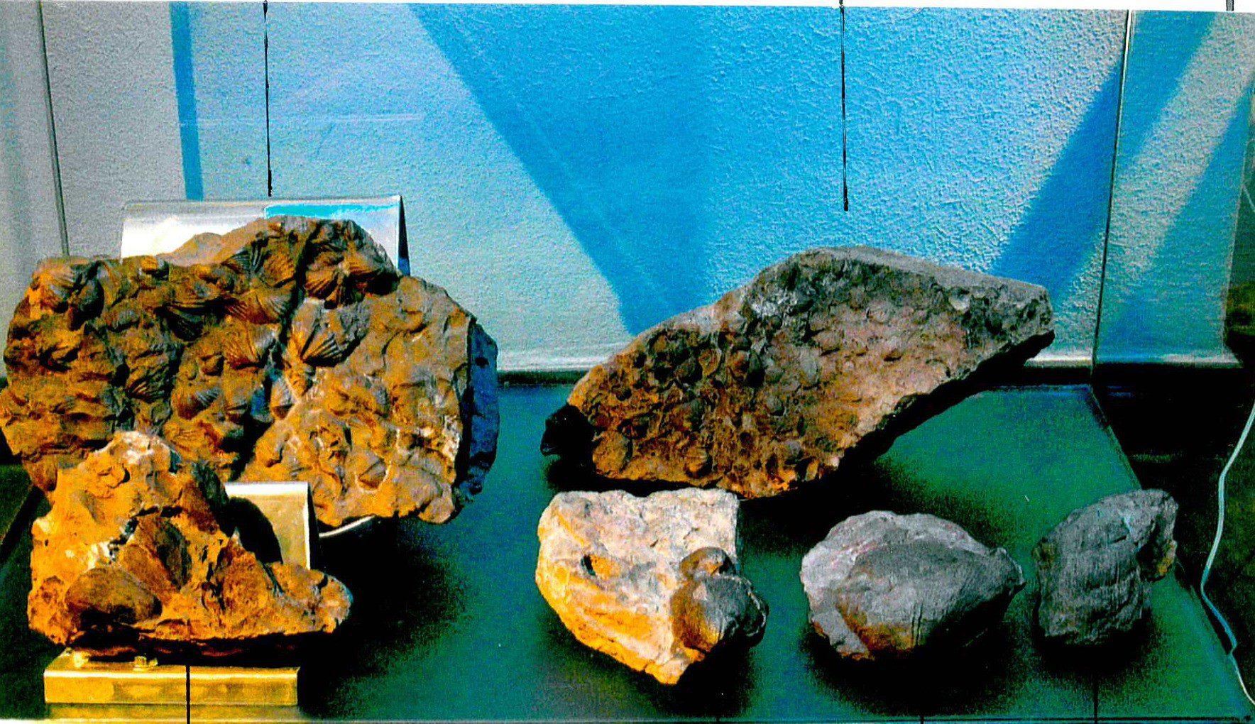 Karbon - Die Sammlung Reinhard Lippes 5