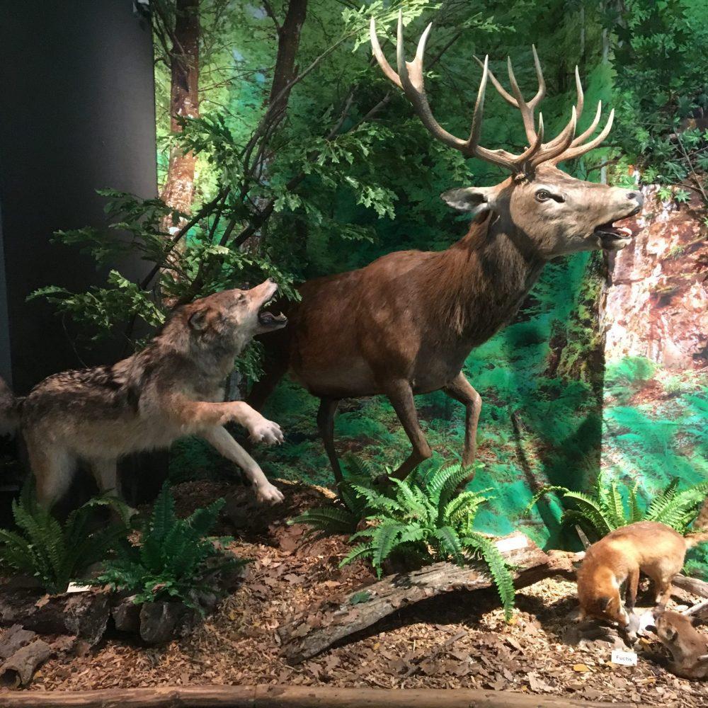 """verlängert:  Ausstellung """"Born to be Wald"""""""