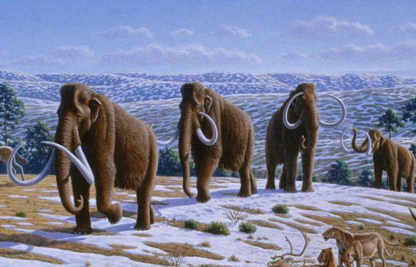 Familienführung: Leben in der Steinzeit 1